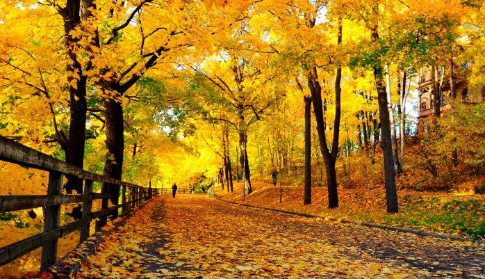 Header_Linnunlaulu_ruska_autumn